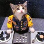 DJ at Cat's Corner!
